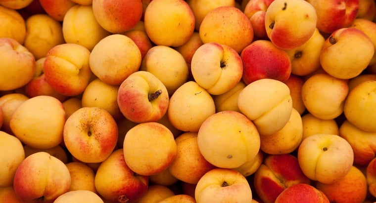 Can Apricot Seeds Fight Cancer?