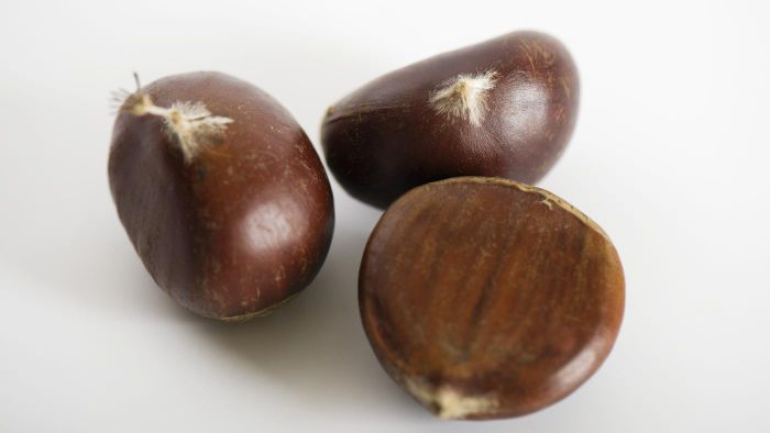 Where Can You Buy Chestnuts?