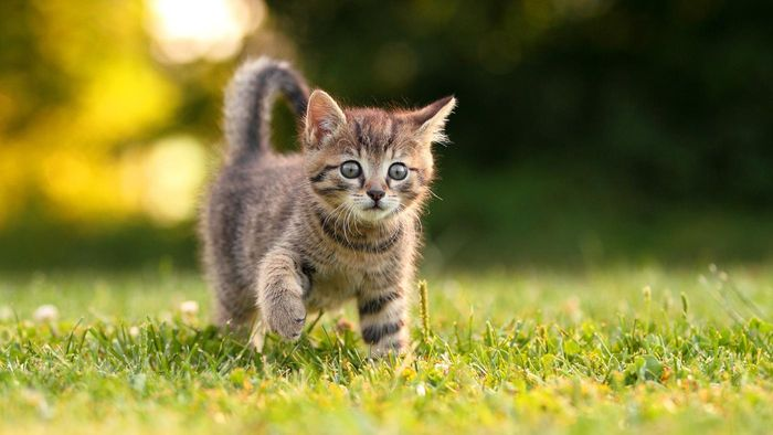 What Are Some Good Ways to Adopt a Baby Kitten?