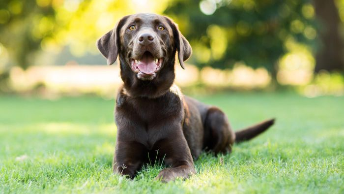 What Are Some Uncommon Female Dog Names?
