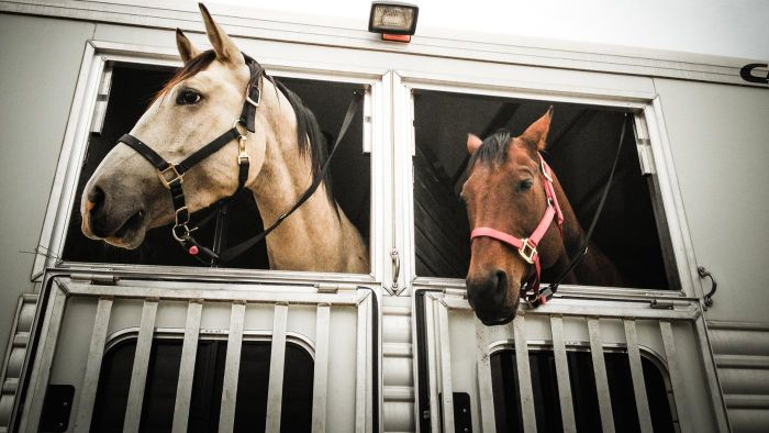 What Do Pre-Owned Horse Trailers Generally Cost?