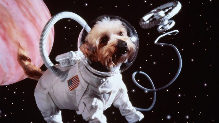 What Was the First Animal Sent to Space?