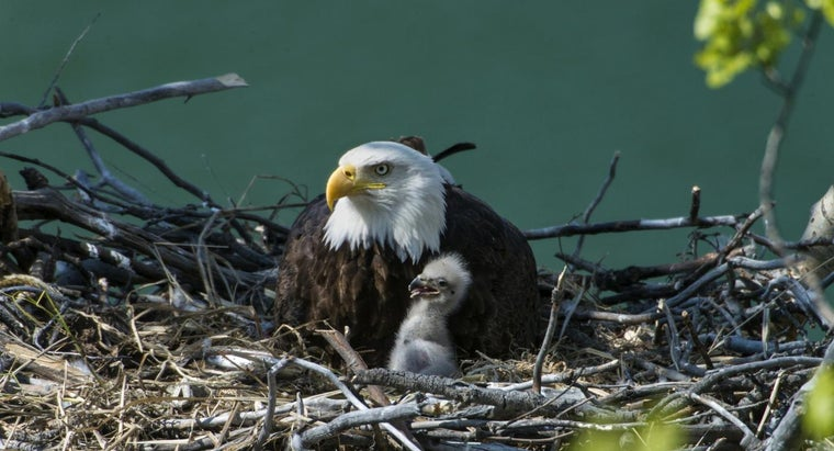 What Activities Can You See Decorah Eagles Perform Live on Camera?
