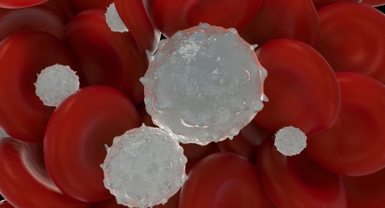 What Is Polycythemia?