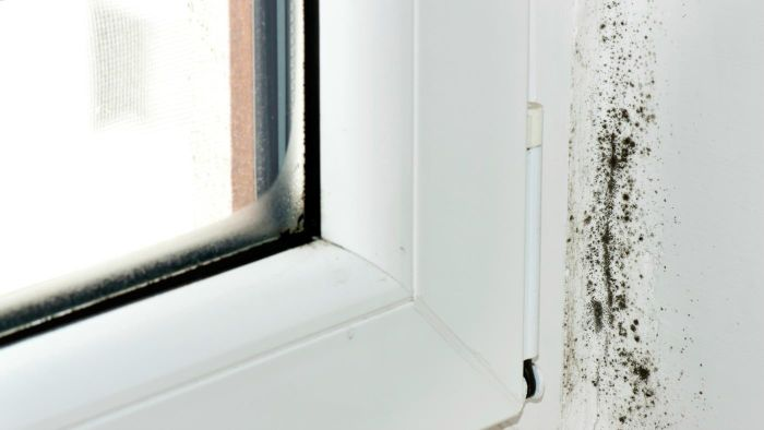 What Are Some Home Remedies for Removing Mold?