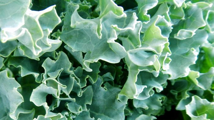 How Do You Use Fresh Kale in a Salad Recipe?
