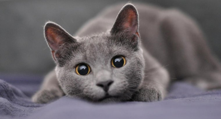 What Are Some Good Names for a Male Gray Cat?