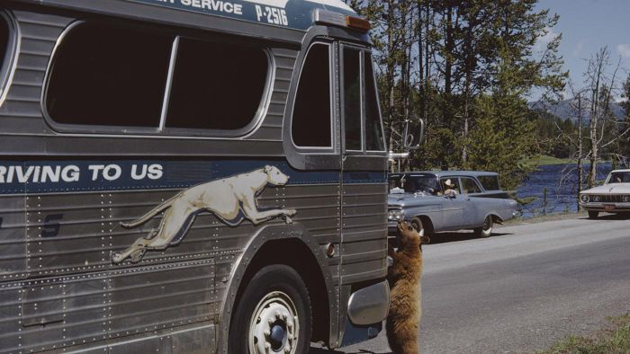 How Do You Find Greyhound Bus Schedules?