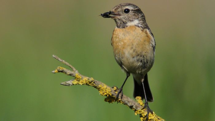 What Birds Are Small and Brown?