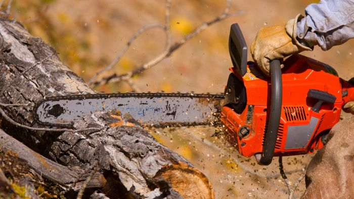 How Do You Find Reviews for the Poulan Pro Chainsaw?