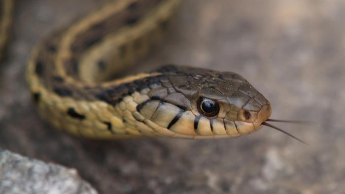 What does it mean to dream of snakes?