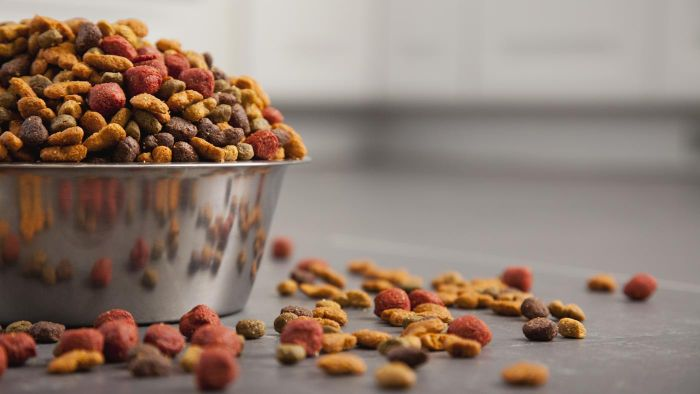 What Are Some Natural Pet Food Brands?