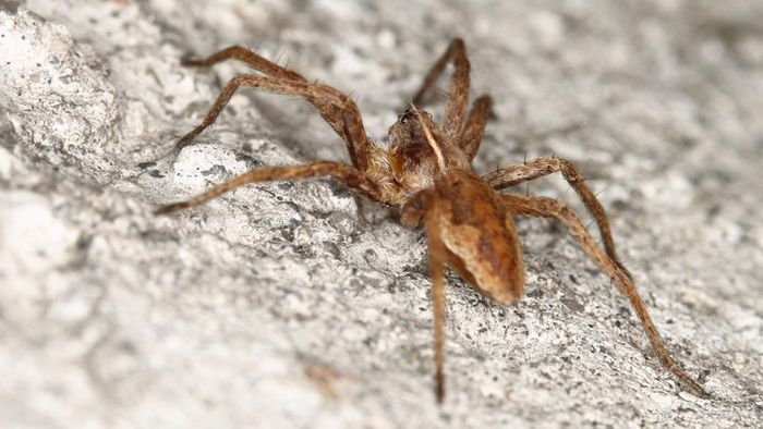Where Can You Find Resources and Photos to Identify the Brown Recluse Spider?