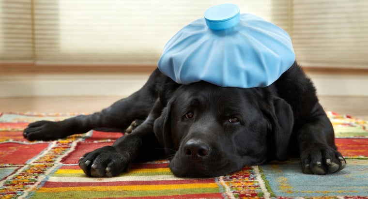 What Are Signs of Heartworms in Dogs?
