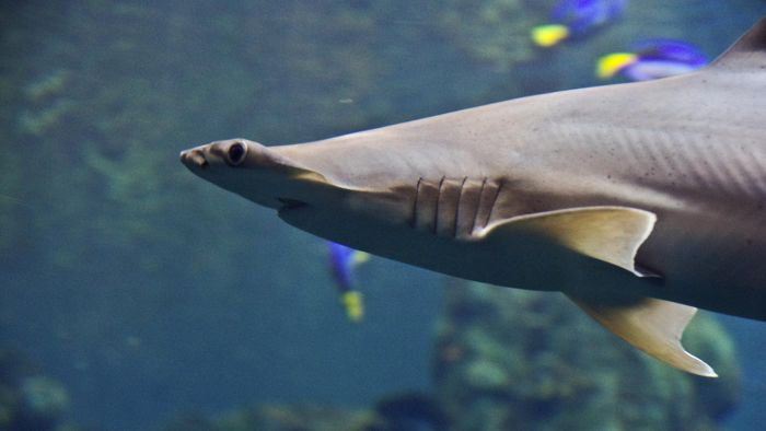 What Do Hammerhead Sharks Eat?