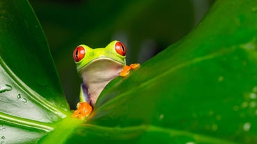 Where Do Tree Frogs Live?