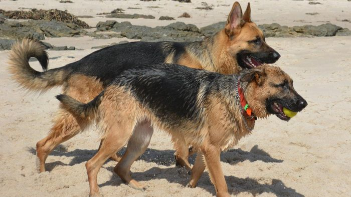 What Are Some Female German Dog Names?