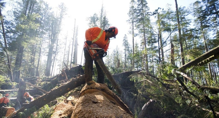 What Are Some Tree-Cutting Tips?