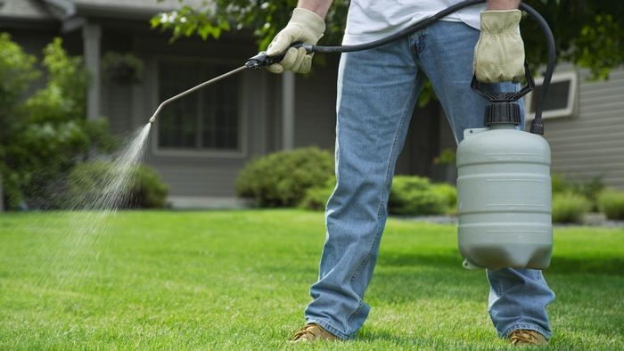 What Are Some Good Weed Killers for Grass?