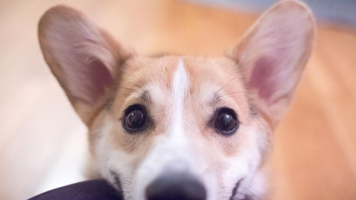 What Are Common Problems With Dogs' Ears?