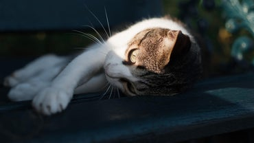 What Are the Symptoms of Ringworm in Cats?