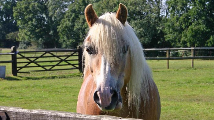 What Are Some Facts About Horse Breeding?