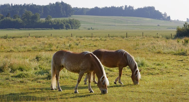 What Foods Do Horses Eat?