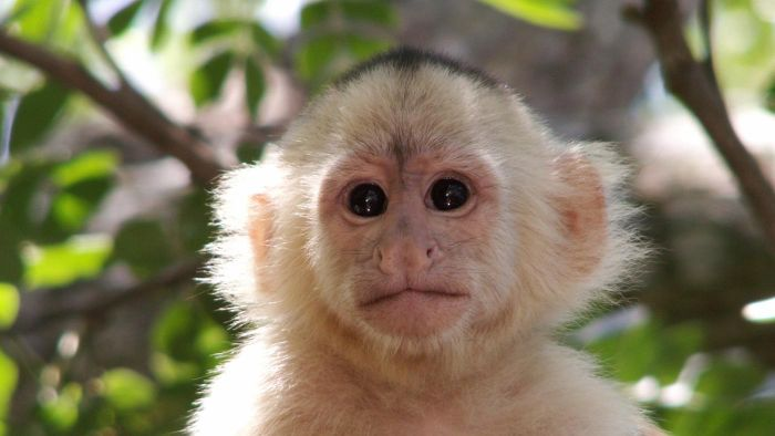Is Research on Monkeys Ethical?
