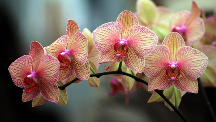 How Do You Care for an Orchid After It Blooms?