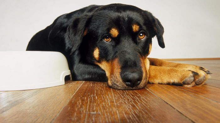 Where can you find information on Rottweiler animal rescues?