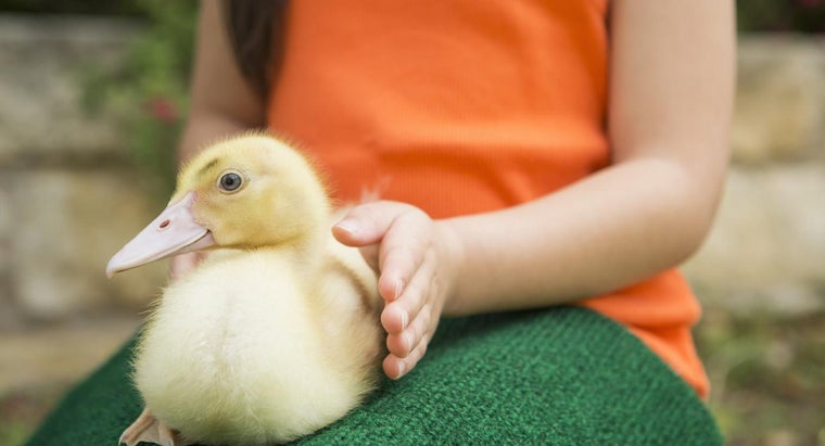 Is There a Website That Generates Names for Pet Ducks?