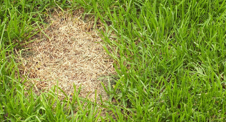 What Is Lawn Disease?