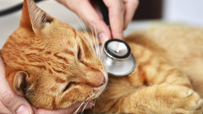 What Services Does the Veterinary Information Network Offer?