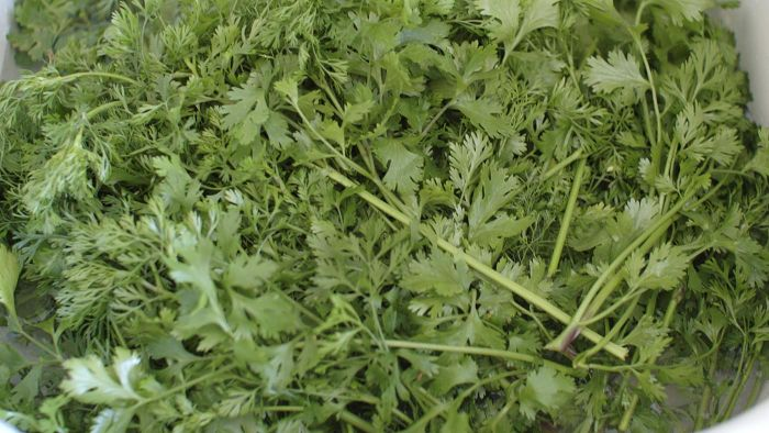 How Do You Use Cilantro in Cooking?