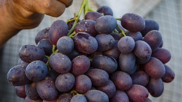 What Are Some Nutritional Facts About Grapes?