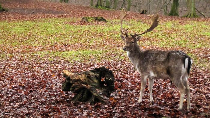 What Is Typically the Opening Day for Deer Season?