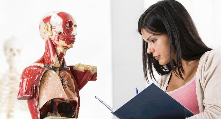 Where Can You Find a List of Human Organs?