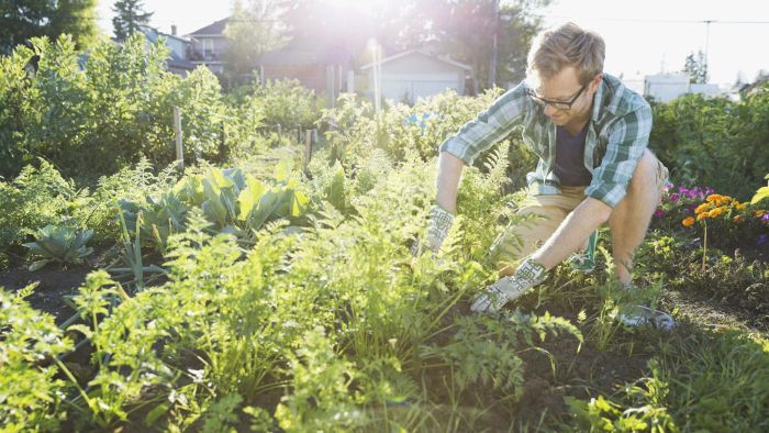 What Are Some Effective Weed Killers According to Experts?