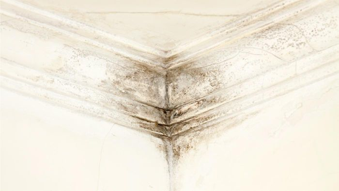 What Health Problems Are Associated With Exposure to Black Mold?