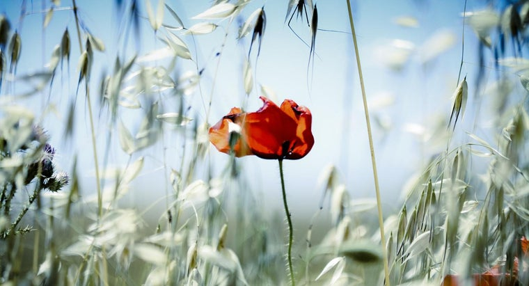 What Can You Do With Lovely Photographs of Flowers?
