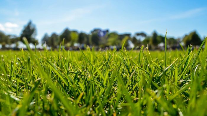 How Can You Grow Grass Seed Fast?