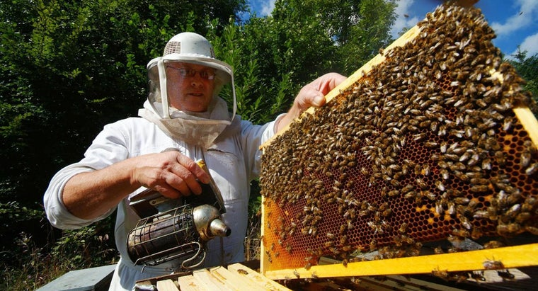 Where Can You Buy Honey Bee Packages?