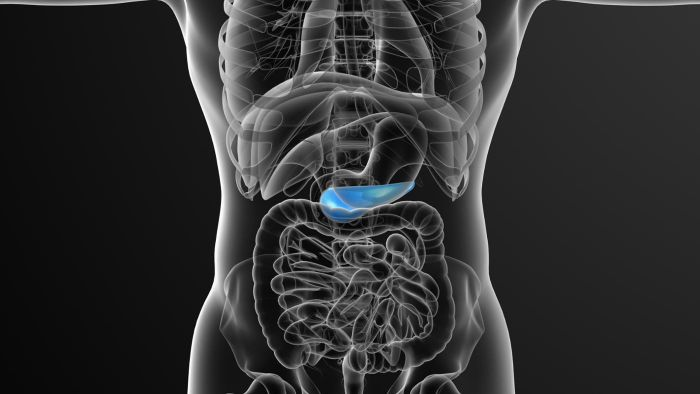 What is the location of the pancreas in the human body?