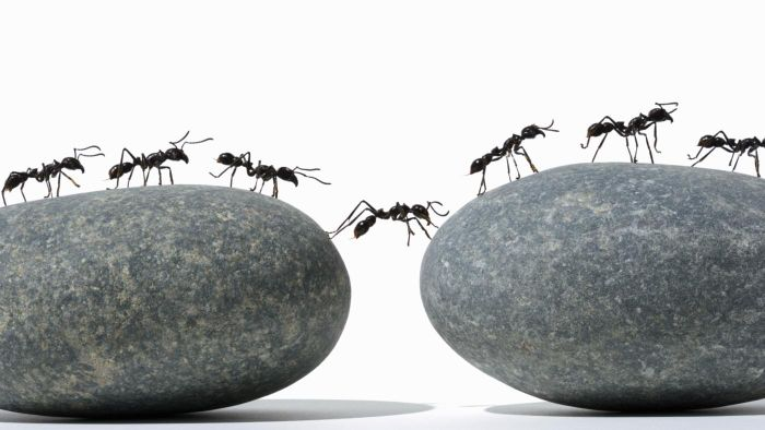 How do you control ants in your home?