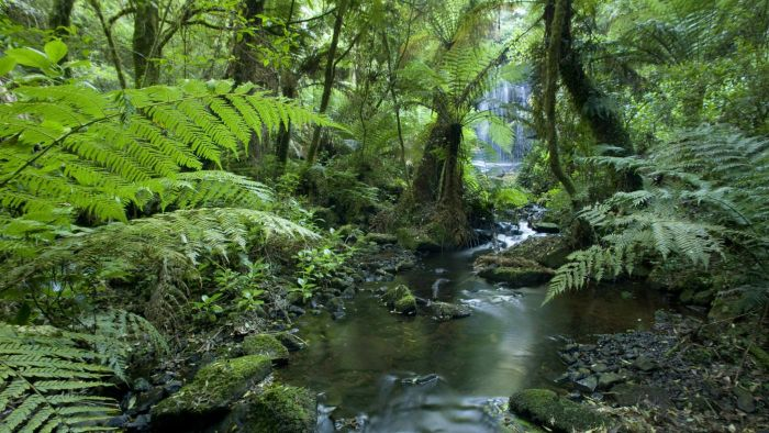 What Is a Tropical Rainforest?
