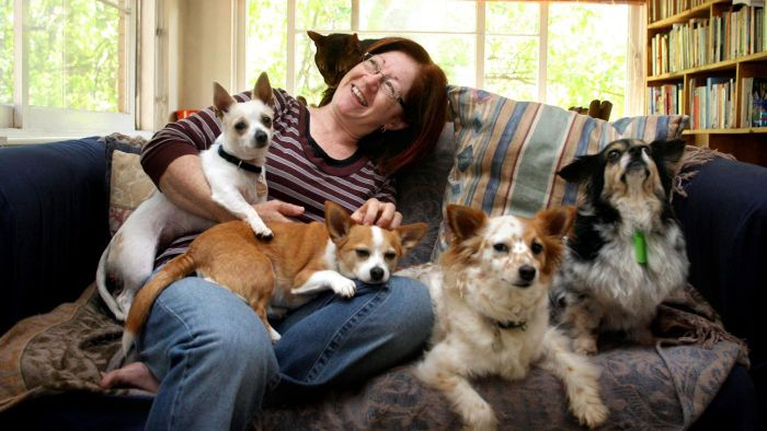 What Is The Pet Rescue?
