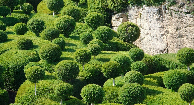What Time of Year Should Boxwood Be Trimmed?