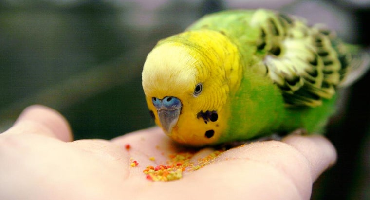 Where Can You Find Birds for Sale by Owner?