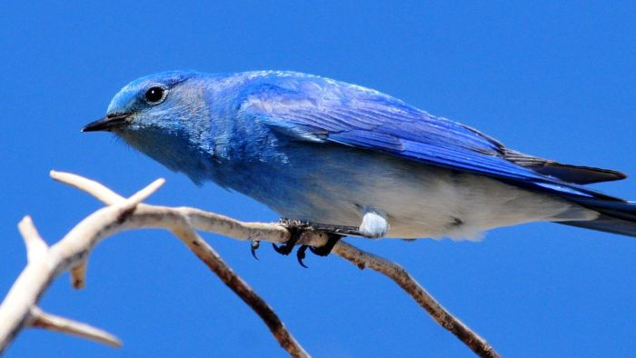 What Do You Feed Bluebirds?