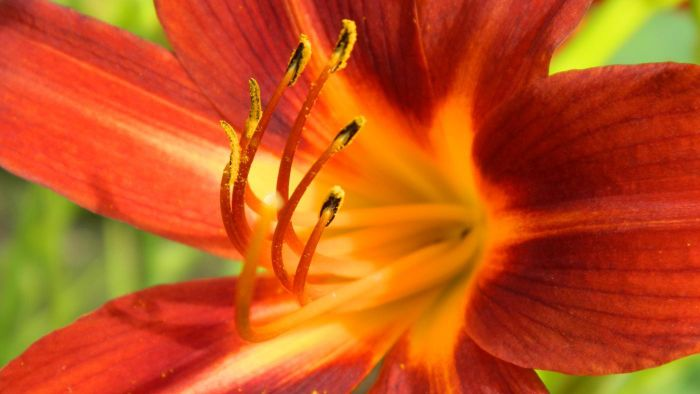 How Much Sunlight Does a Lily Plant Require?